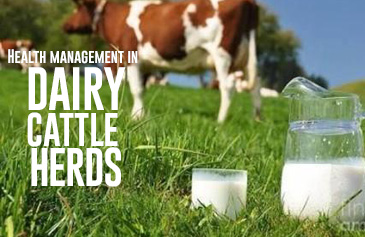 Health management in Dairy Cattle Herds