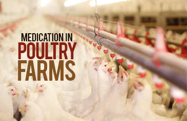 Medication in poultry Farms