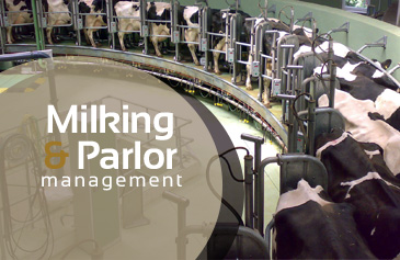 Milking & Parlor management