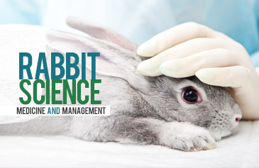 Rabbit Science Medicine And Management